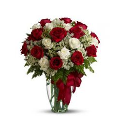 24 Red and White Roses in Free Vase