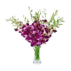 12 Purple Orchids with Free Vase