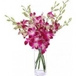 6 Pink Orchids with Free Vase