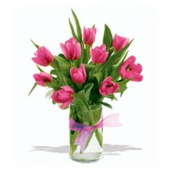 12 Pink Tulips with Free Vase