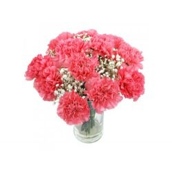 12 Pink Carnation with Free Vase