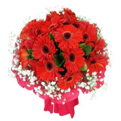 24 Stems Red Gerberas in a Bouquet