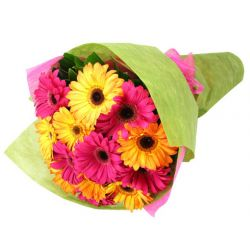 12 Pink and Yellow Gerberas