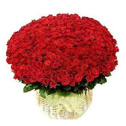 100 Red Roses in Flower Basket