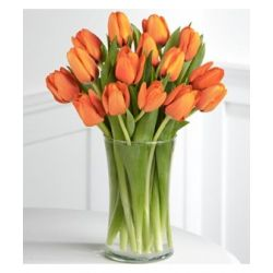 15 Orange Tulips with Free Vase