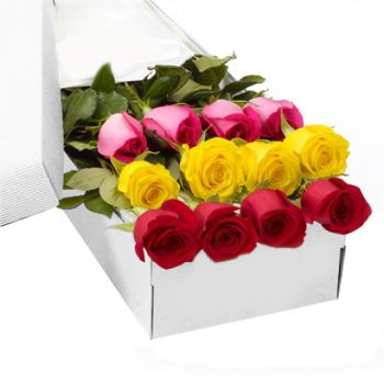 12 Mixed Color Roses in a Box