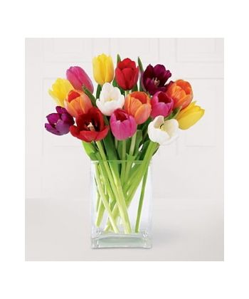 12 Assorted Tulips with Free Vase